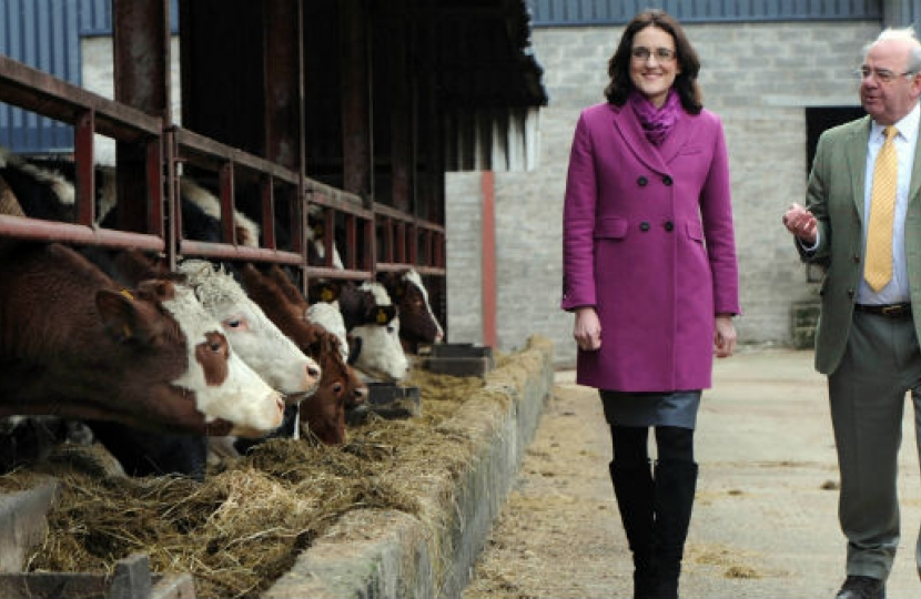 Theresa Villiers MP visiting a dairy farm in Northern Ireland